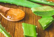 Pflanze Aloe Vera Gel_Heilpflanzen - Aloe-Vera-Gel kühlt und befeuchtet die Haut und lindert zudem noch den Schmerz und Juckreiz - © Shutterstock