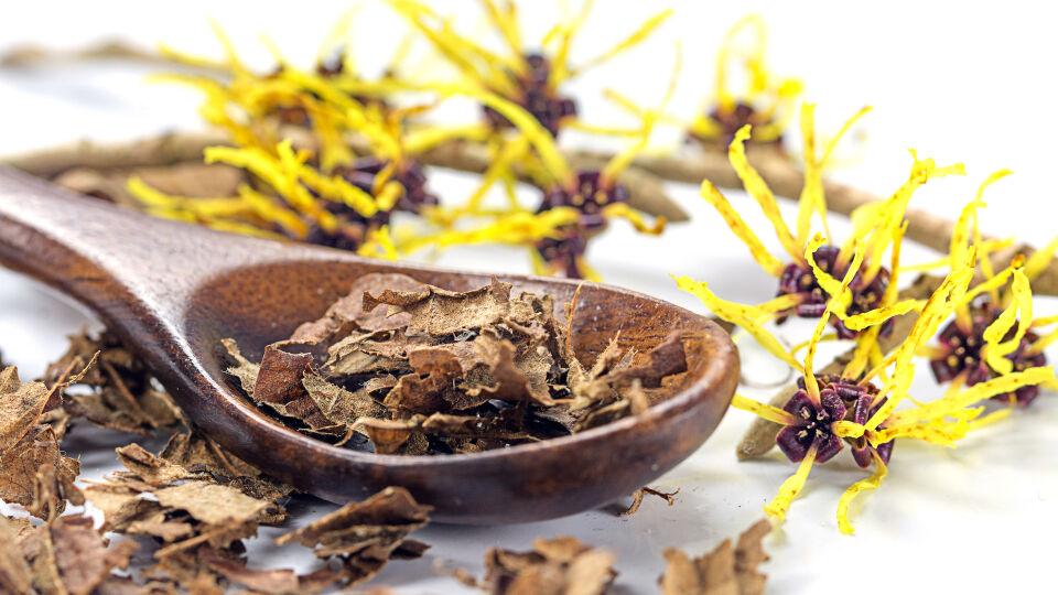Hamamelis Zaubernuss Heilpflanzen - © Shutterstock