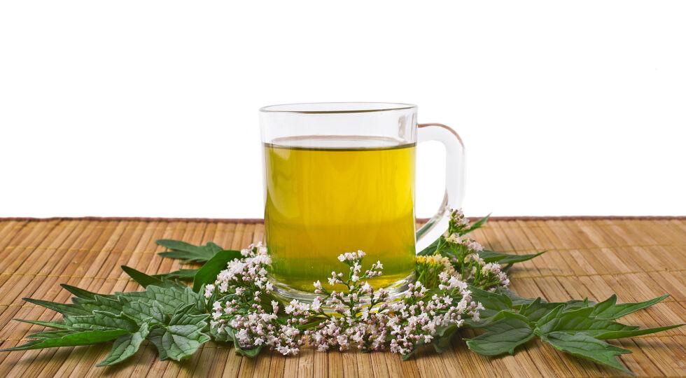 Baldrian Tee Heilpflanzen - Für Baldrian liegen die meisten Forschungsdaten vor. Er wirkt psychisch ausgleichend, verkürzt die Einschlafzeit und reduziert die nächtlichen Wachphasen. Baldrian vermindert Angst und Unruhe, ohne dabei eine Tagesmüdigkeit auszulösen. Deshalb wird Baldrian auch bei Prüfungsängsten eingesetzt. Die empfohlene Tagesdosierung liegt bei 500 bis 600 mg Trockenextrakt. Es dauert etwa zwei Wochen, bis Baldrian seine volle Wirkung erreicht. - © Shutterstock