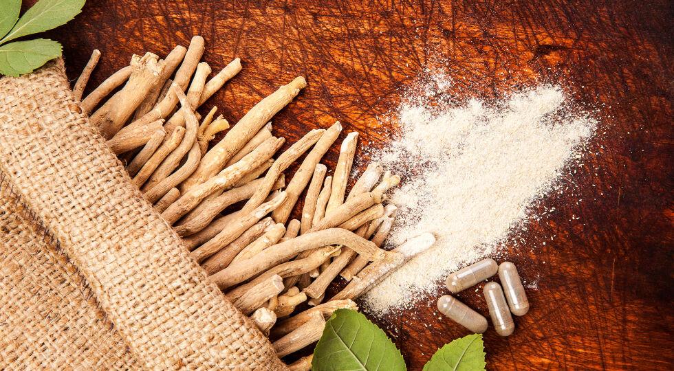 """Heilpflanzen Schlafbeere Ashwagandha - Die Schlafbeere, auch """"Ashwagandha"""" genannt, wird seit 3.000 Jahren im Ayurveda, der traditionellen indischen Medizin, verwendet. Der Pflanze wird nachgesagt, dass sie bei Schlafstörungen, Angstzuständen, Ermüdung und bei Nervosität hilft. - © Shutterstock"""