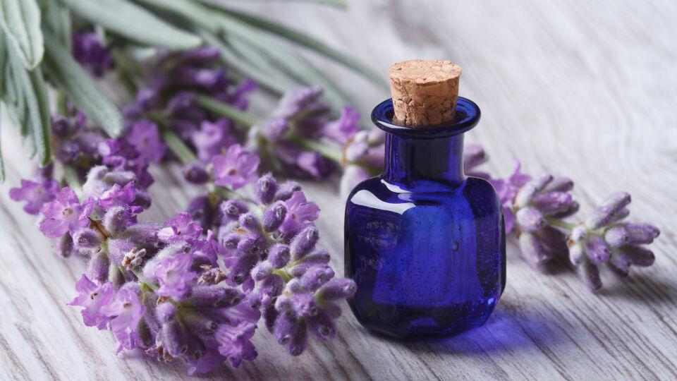Lavendel Öl Heilpflanzen - © Shutterstock