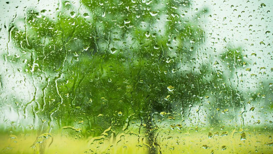 Regen Fenster grüner Baum - Bei Regen spürt man die Pollenallergie mehr. - © Shutterstock
