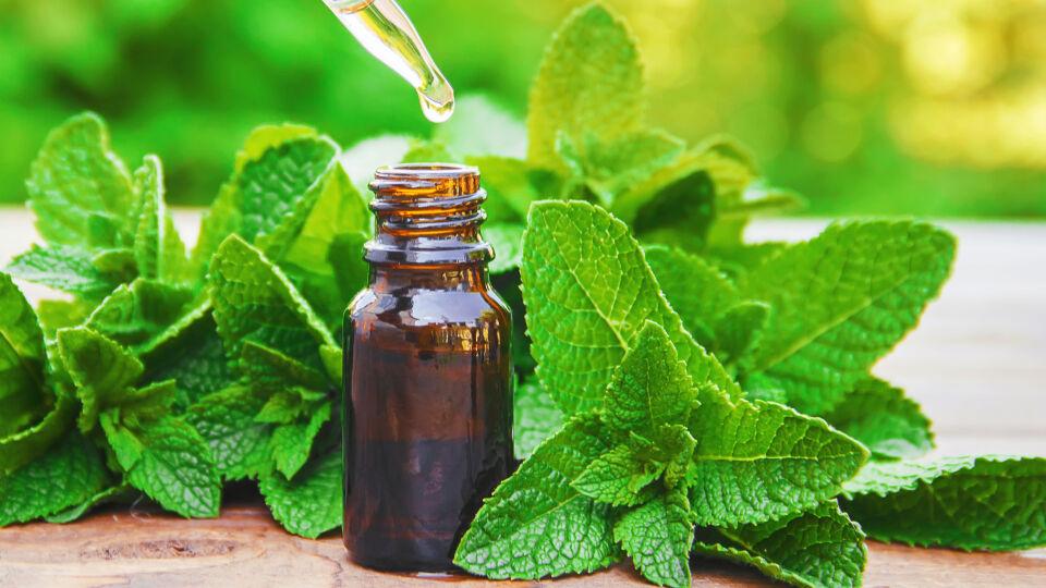 Minze Öl Heilpflanzen - © Shutterstock