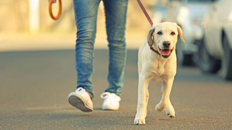 Bewegung Spaziergang - Nach kurzer Schonungszeit ist es am besten, seinen Alltag wieder aufzunehmen. Wichtig ist dabei, Schmerzen zu vermeiden und sich nicht zu überfordern. - © Shutterstock