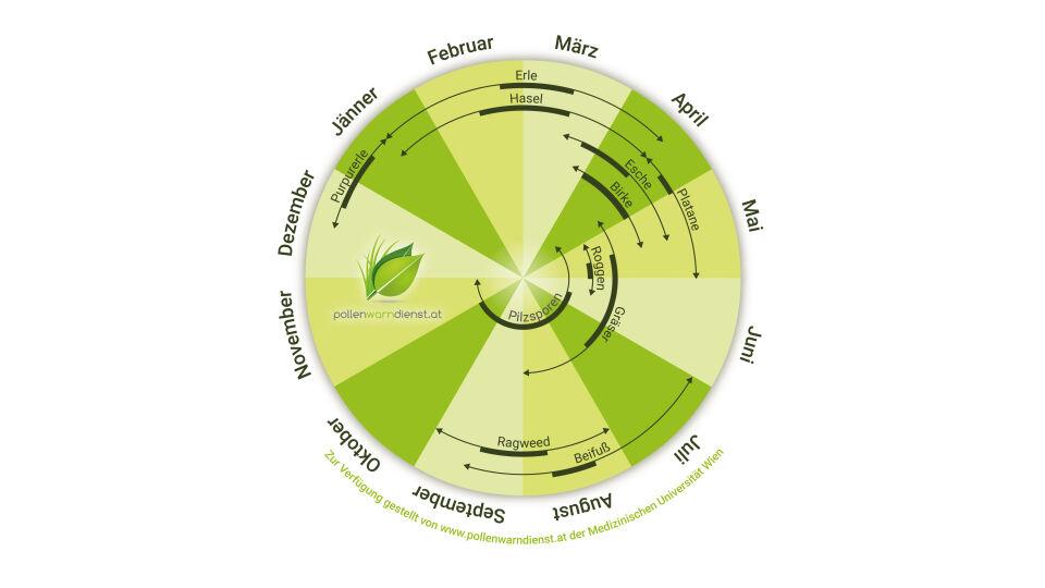 Pollen im Jahresverlauf_c_www.pollenwarndienst.at der Medizinischen Universität Wien - Das Pollen-Jahr ist zwar von der Wetterlage und der Menge der Pollen abhängig – trotzdem lässt sich ein ungefährer Zeitraum vorhersagen. - © www.pollenwarndienst.at der Medizinischen Universität Wien
