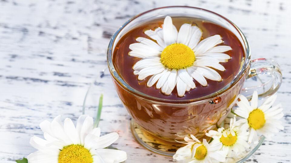Kamille Tee Heilpflanze - Der gute alte Kamillentee ist nach wie vor das Mittel der Wahl bei Mundschleimhautentzündungen. - © Shutterstock