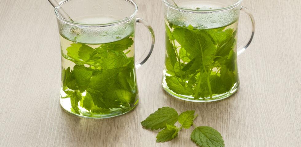 Melisse Tee Heilpflanze - © Shutterstock