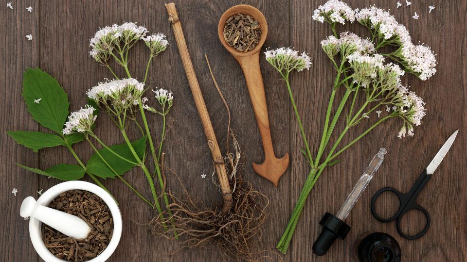 Baldrian Heilpflanze - © Shutterstock