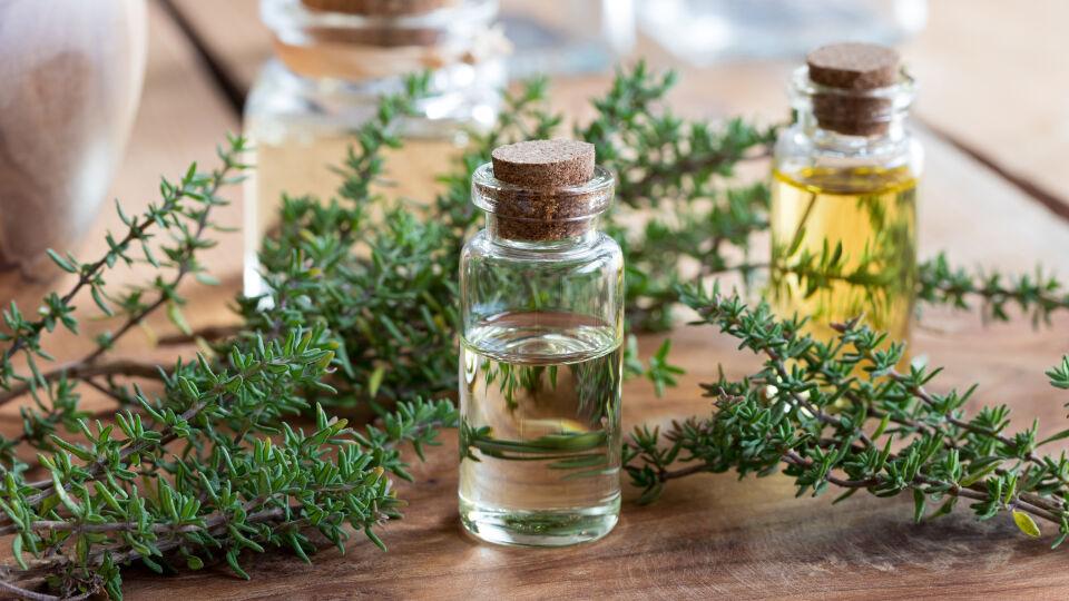 Thymian Heilpflanze - © Shutterstock