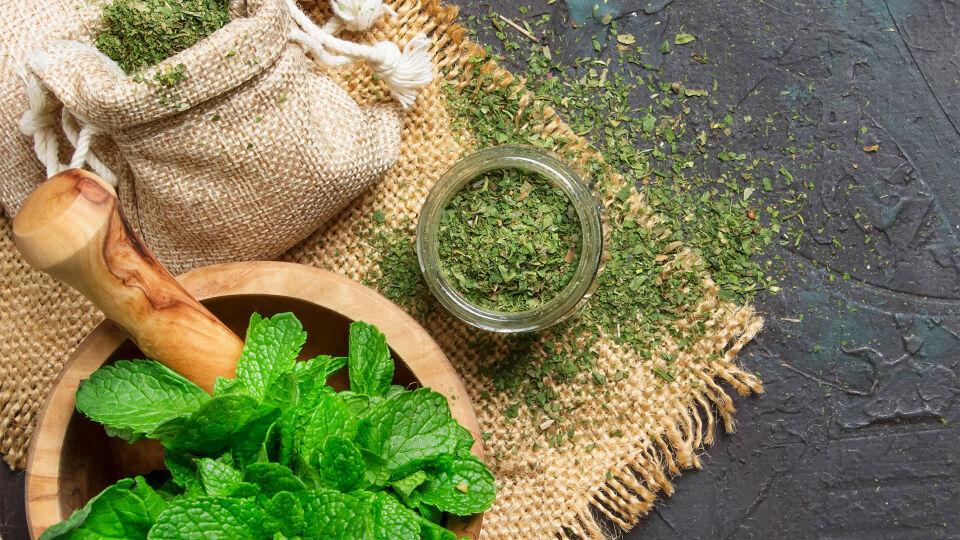 Pfefferminze Heilpflanze - © Shutterstock