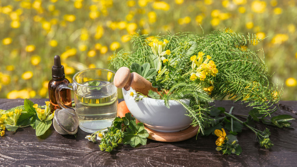 Primel_Schlüsselblume_Heilpflanze - © Shutterstock