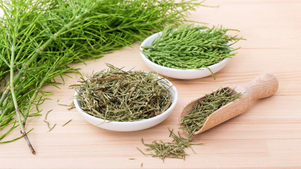 Heilpflanze Ackerschachtelhalm - Ackerschachtelhalm hat einen wassertreibenden Effekt.