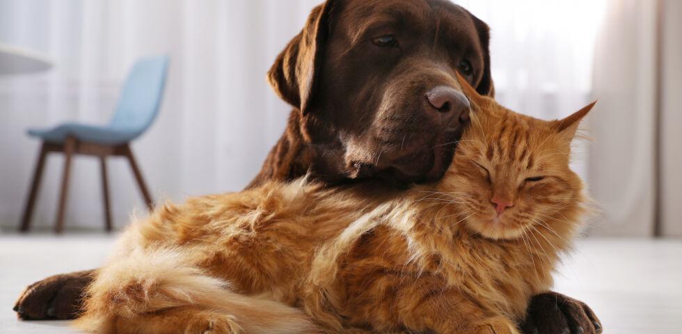 osteopathie für hund und katze  deine apotheke