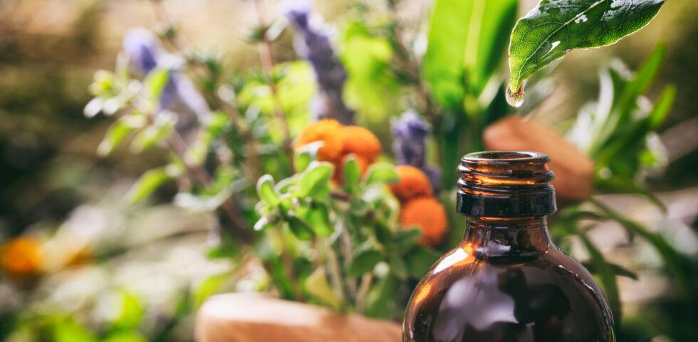 Ätherische Öle Heilpflanzen - Bestimmte Heilpflanzen helfen bei leichten Magen-Darm-Beschwerden. - © Shutterstock