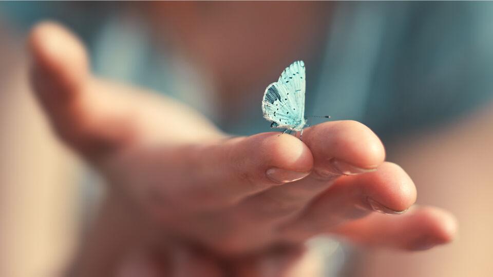 Schmetterling sitzt auf Finger - Achtsamkeit kann man trainieren. Schätzen Sie zum Beispiel auch kleine Momente des Alltags. - © Shutterstock