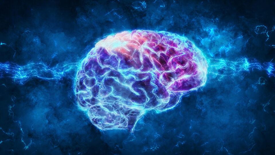 Gehirn - Die Gedächtnisleistung und Merkfähigkeit nimmt bereits ab dem 30. Lebensjahr ab. Vergesslichkeit macht sich im Alltag verstärkt ab dem 50. Lebensjahr bemerkbar. - © Shutterstock