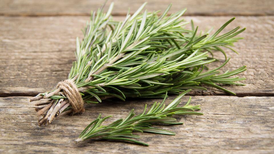Rosmarin Heilpflanzen - Rosmarin fördert die Verdauung, wirkt krampflösend und harntreibend. - © Shutterstock