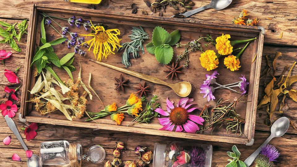 Heilpflanze Mix - Pflanzliche Unterstützer sind zum Beispiel Brennnessel, Hagebutte, Pappel und Wacholder. - © Shutterstock