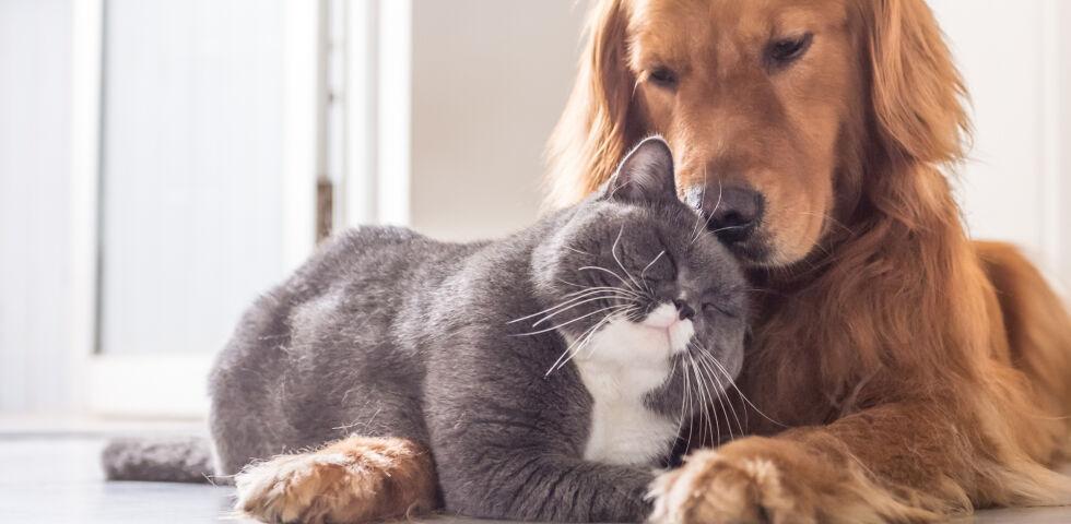 Haustier Katze und Hund - © Shutterstock