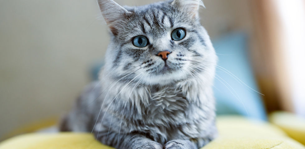 Haustiere Katze - © Shutterstock