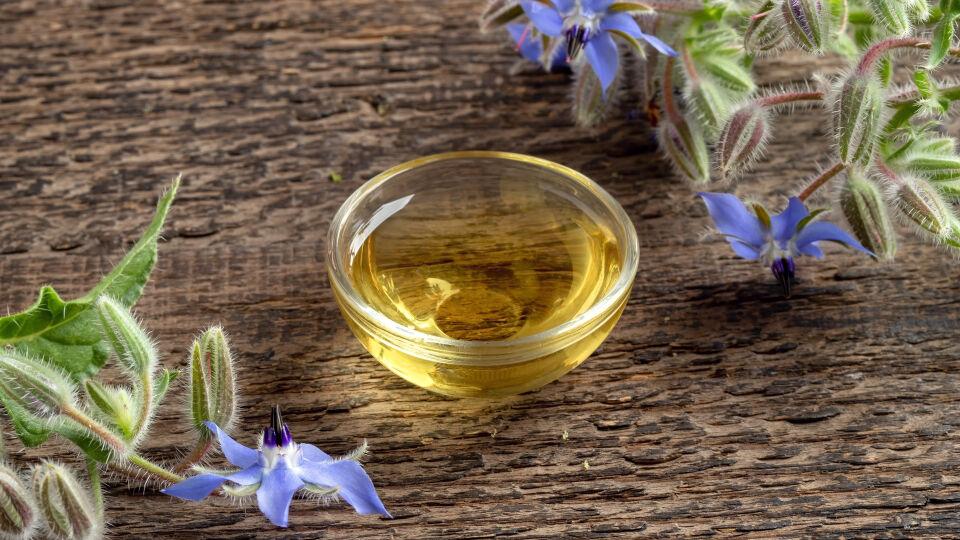 Borretsch Heilpflanze - Borretsch-Öl kann innerlich und äußerlich angewendet werden.