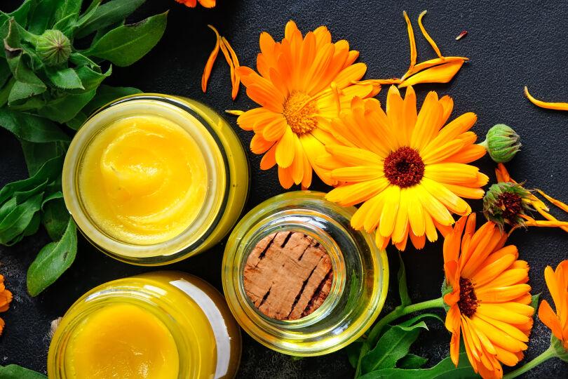 Ringelblume Heilpflanze 2