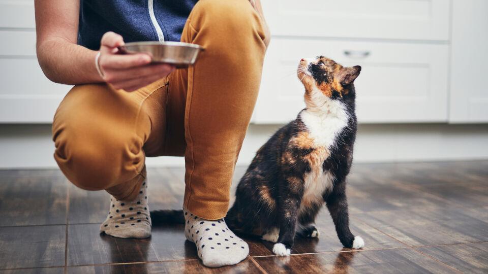 Haustier Katze bekommt ihr Futter - Seriöse Tiersitter kommen vorab zu einem Kennelerntreffen vorbei.