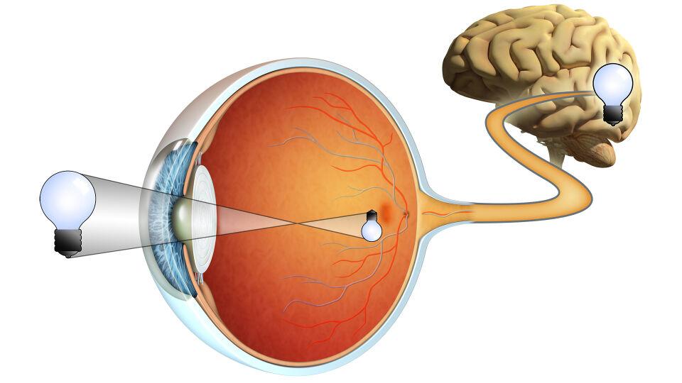 Auge - © Shutterstock