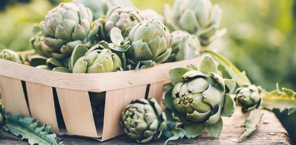 Heilpflanzen Artischocke - Die für uns nützlichen Inhaltsstoffe finden sich in den Blättern der Artischocke.