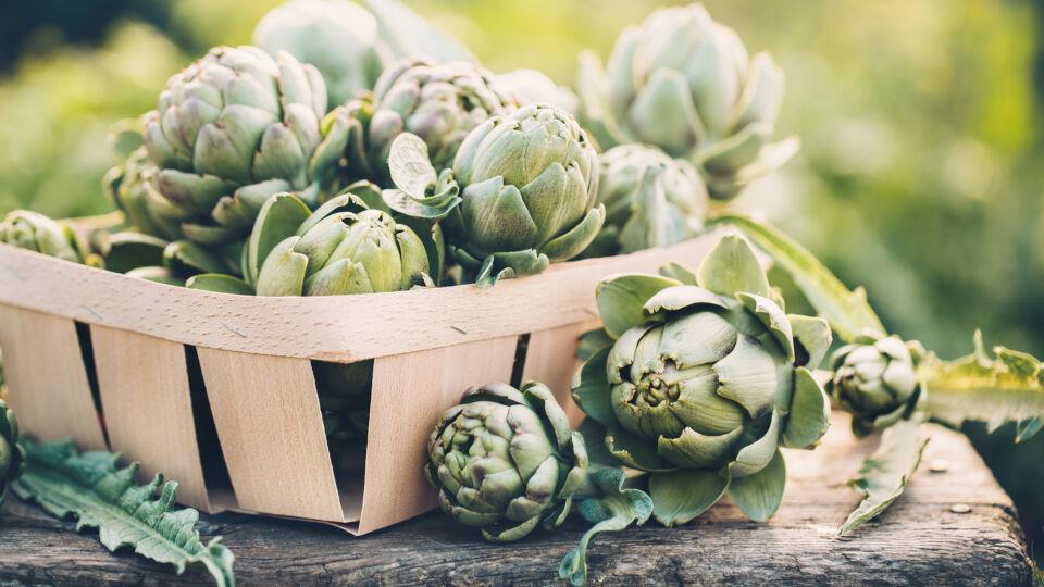 Heilpflanzen Artischocke - In der Apotheke sind Artischocken-Zubereitungen mit einem gleichbleibenden Wirkstoffgehalt in Form von Tabletten und Lösungen erhältlich.