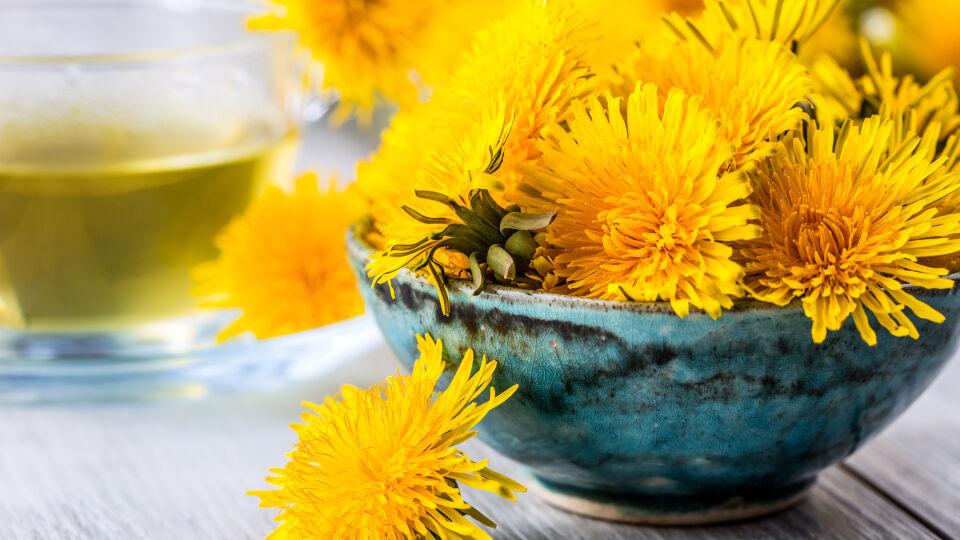 Heilpflanzen Löwenzahn - Der Löwenzahn kann als Tee, Fertigpräparat oder Frischpflanzensaft eingenommen werden.