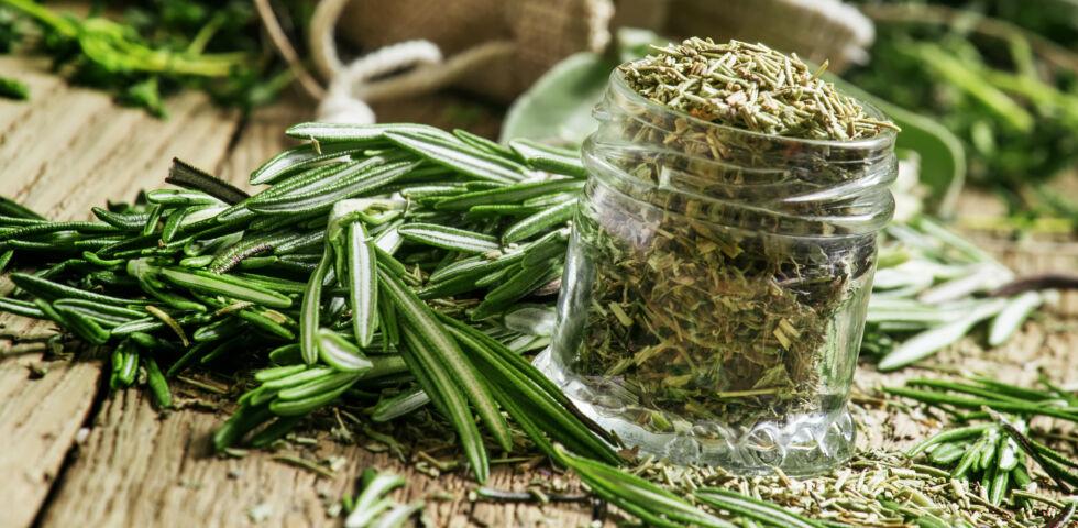 Heilpflanze Rosmarin - Rosmarin