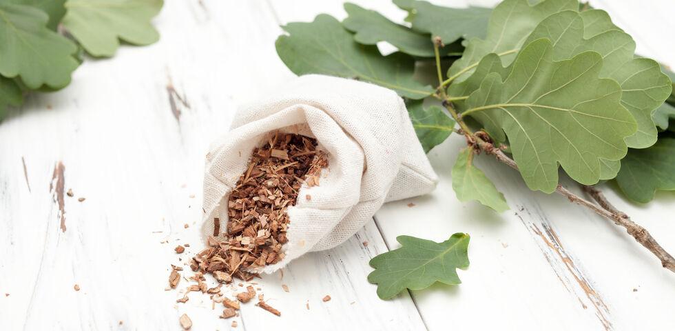 Eichenrinde Heilpflanzen - In der Eichenrinde finden sich zwischen acht und 20 Prozent Gerbstoffe; daher zählt die Eiche zu den gerbstoffreichsten heimischen Heilpflanzen. - © Shutterstock