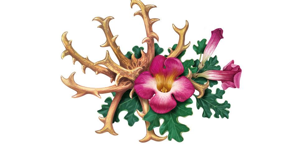 Teufelskralle Heilpflanzen - Die Teufelskralle stammt ursprünglich aus dem südlichen Afrika. - © Shutterstock