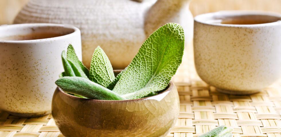 Salbei_Tee_Heilpflanzen_shutterstock_332870897 - In der Apotheke sind Zubereitungen aus Salbei-Blättern erhältlich.