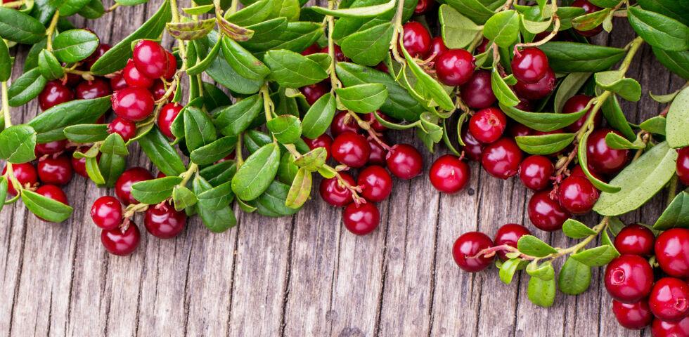 Cranberry Heilpflanzen - Der Cranberry wird eine antibakterielle Wirkung zugesprochen. - © Shutterstock