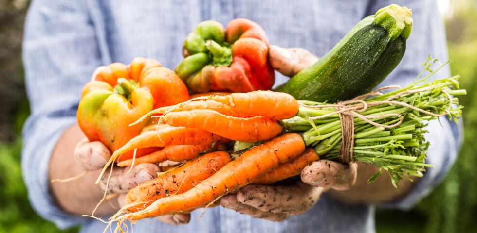 Frisches Gemüse_shutterstock_489543601 - Frisches Obst und Gemüse enthält besonders viele Vitamine.