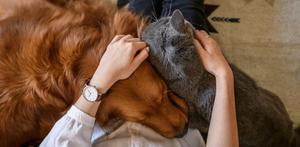 Hund und Katze_Haustiere_shutterstock_796895929 - Der Abschied vom geliebten Haustier ist nicht einfach.