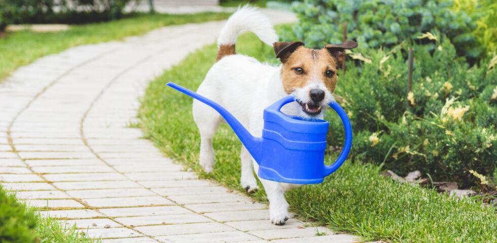 Hund im Garten_Haustiere_shutterstock_289540817 - Dünger kann für Hund, Katze und Co. gefährlich werden.