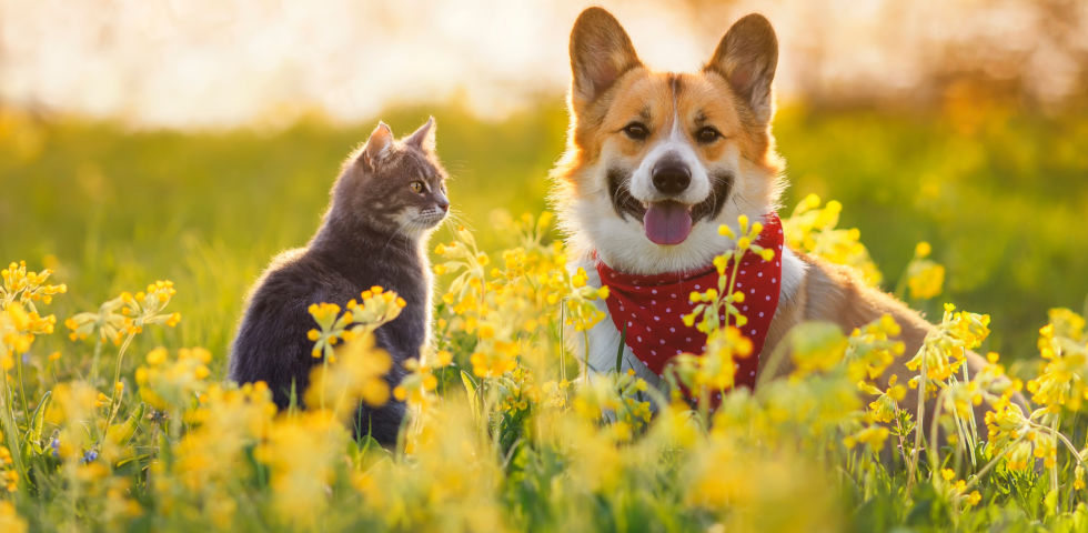 Katze und Hund im Garten_Haustiere_shutterstock_1948012750 - Haustierbesitzer sollten sich in Bezug auf Wurmbefall vom Tierarzt beraten lassen.