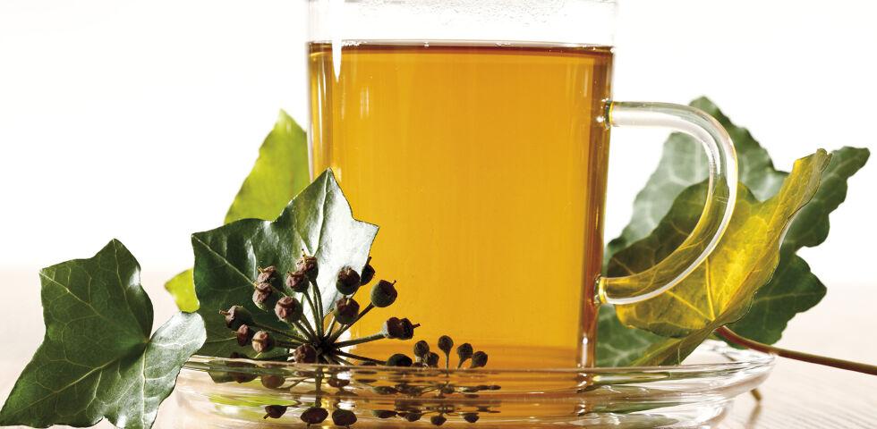 Efeu Heilpflanzen - Die Teezubereitung ist heute nicht mehr so gebräuchlich. Stattdessen wird auf standardisierte Efeuextrakte aus der Apotheke zurückgegriffen. - © Shutterstock