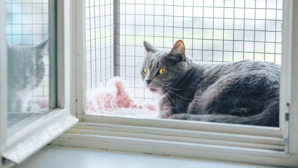 Haustier Katze Fensterbalkon - Ein Katzenbalkon bietet Wohnungskatzen mehr Freiheit am Fenster – und neue Perspektiven. - © Shutterstock