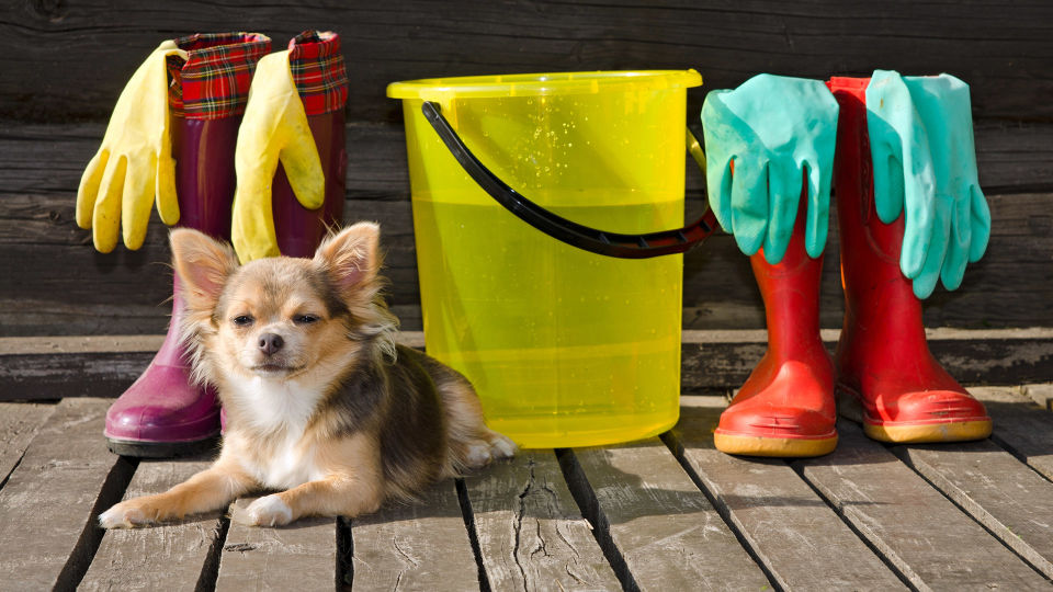 """Haustier Hund Reinigungsmittel - Verwahren Sie Ihre Putzmittel und Medikamente """"haustiersicher"""". - © Shutterstock"""