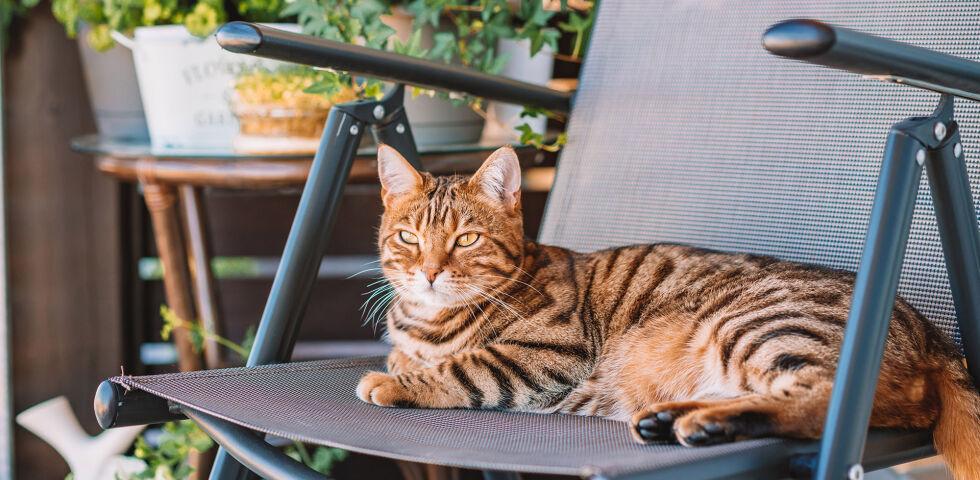 """Katze Balkon - Katzen sind sehr neugierige Tiere. Manches """"Spielzeug"""" kann aber gefährlich sein. - © Shutterstock"""