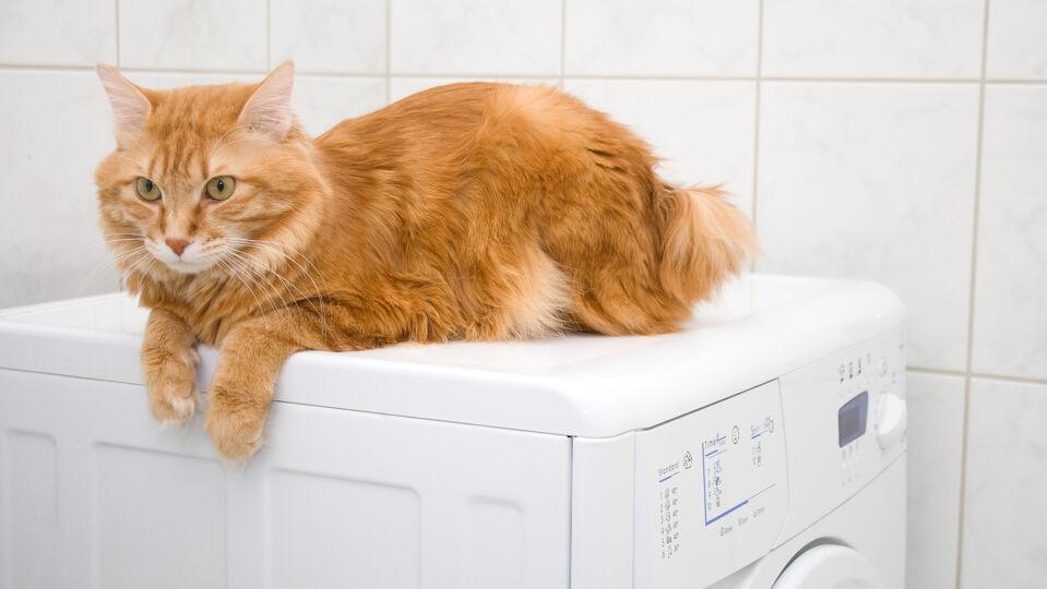 Haustier Katze Waschmaschine - Waschmaschinen ziehen viele Katzen an. - © Shutterstock