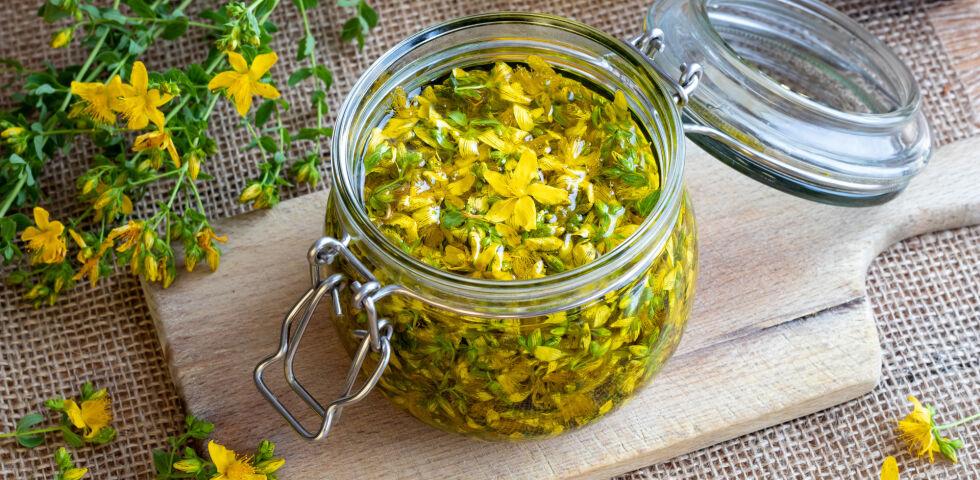 Johanniskraut Heilpflanzen - © Shutterstock