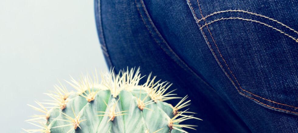 Hämorrhoiden_Po_Kaktus - Die Behandlung von Hämorrhoiden ist in einem frühen Stadium einfacher – sprechen Sie daher rechtzeitig mit Ihrem Arzt oder Apotheker. - © Shutterstock