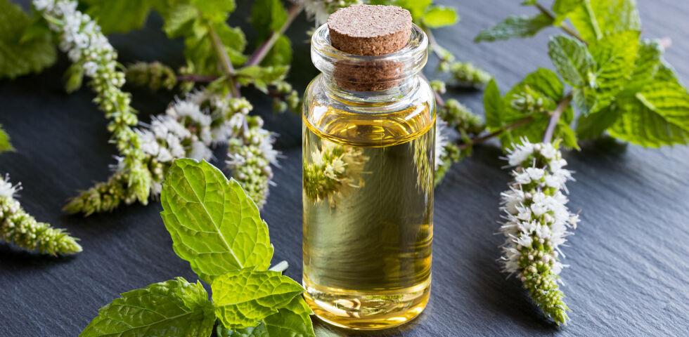 Pfefferminze Öl Heilpflanzen - Die Pfefferminze - © Shutterstock