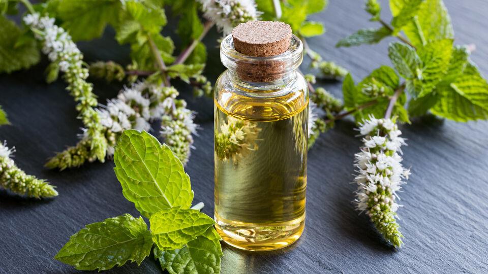 Pfefferminze Öl Heilpflanzen - Pfefferminze hilft nicht nur bei Magen-Darm-Verstimmungen, sondern auch bei Kopfschmerzen und Erkältungen. - © Shutterstock